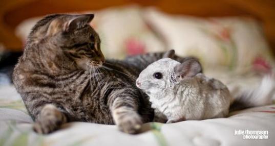 在现实中女生很怕老鼠,很多人也讨厌老鼠,肮脏、疾病、恶心等等一系列的词语是老鼠的代名词,但在游戏中则不同。今天我机小编给大家带来的合集就是以美化可爱的老鼠为题材打造的众多好玩游戏制作合集,方便大家选择和下载。 该合集包括众多大众最为喜爱cheezia奶酪老鼠、猫和老鼠、拯救仓鼠等好玩游戏,精彩不容错过,感兴趣的玩家赶快来下载试玩吧! .
