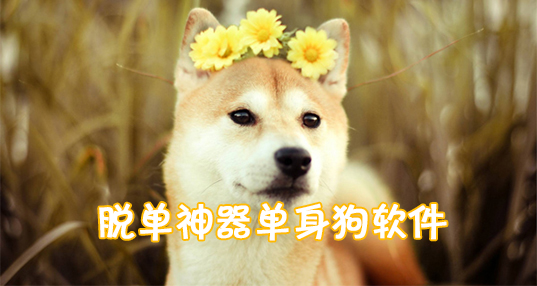 单身狗软件合集