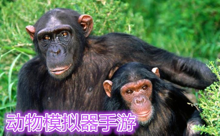 动物模拟器