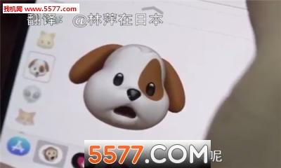 苹果x小动物软件