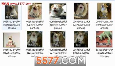 表情喊妈水印动物去图片版表情原图包扯脸图片