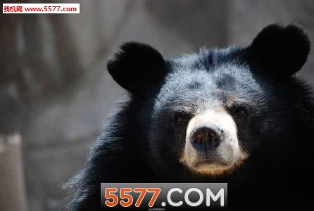 熊熊乐园手游安卓版截图0