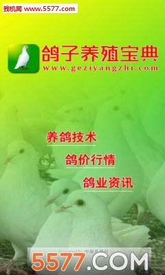 养鸽宝典手机版截图1