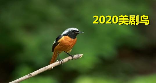 2020美剧鸟