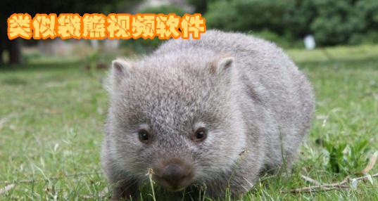 类似袋熊视频的软件app_袋熊视频最新版下载_免费版
