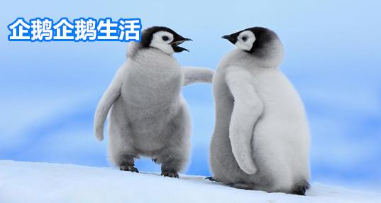 企鹅企鹅生活