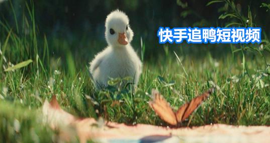 快手追鸭短视频