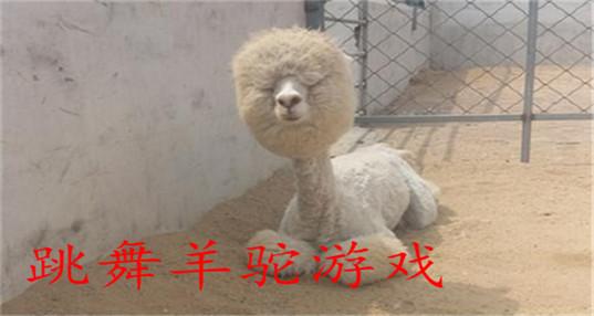 跳舞羊驼游戏