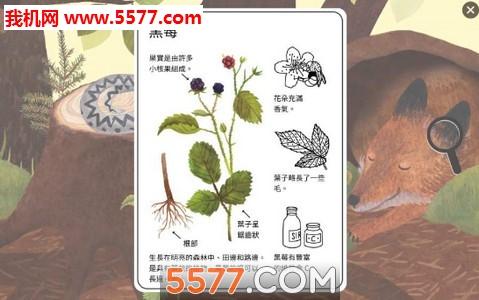 小棕鼠的自然生态百科安卓版(科普教育)截图2