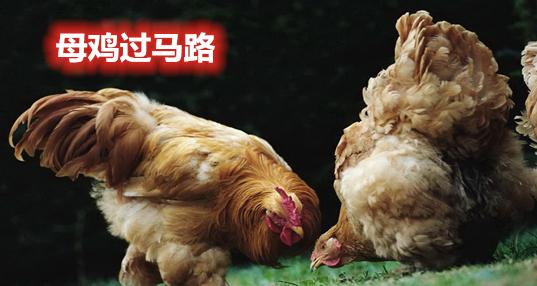 类似母鸡过马路